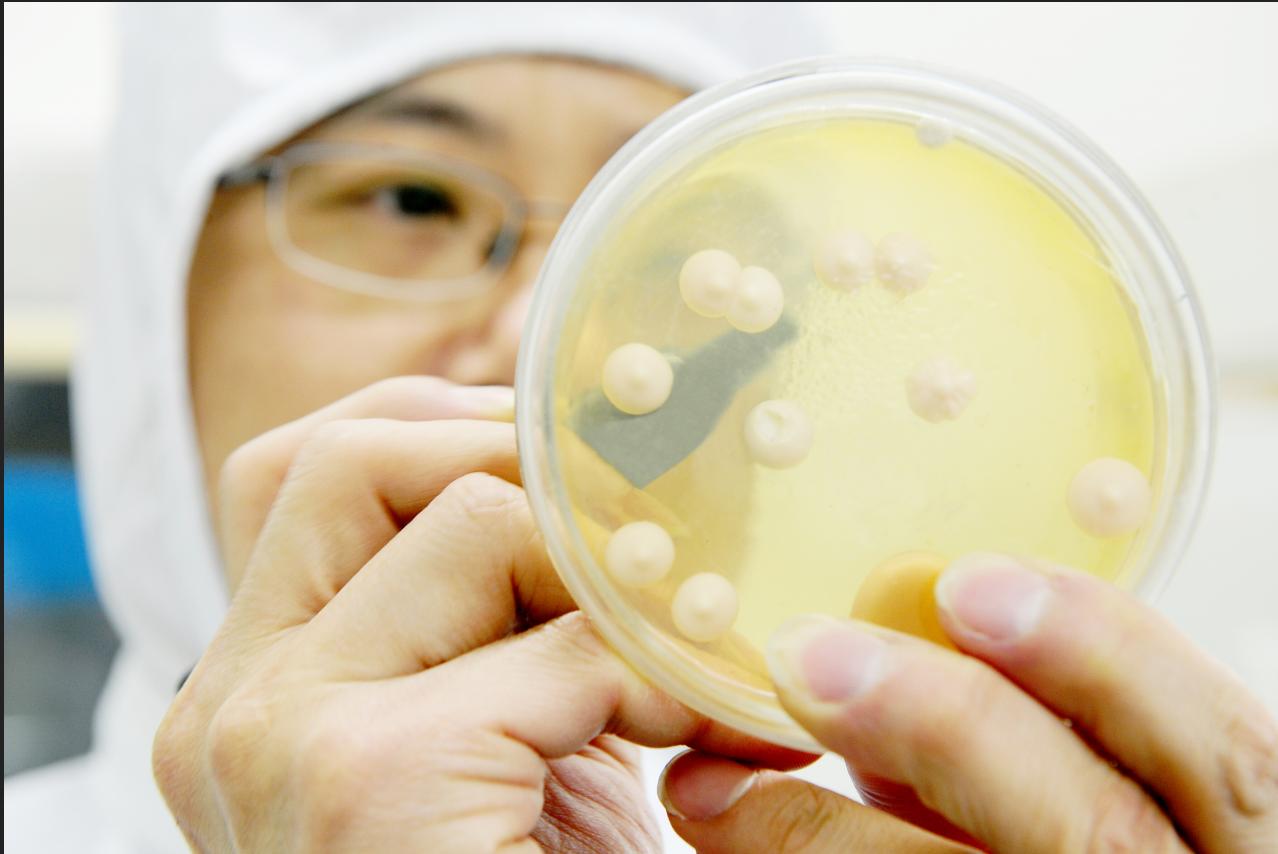 科普 | 菌种保藏的常见方法
