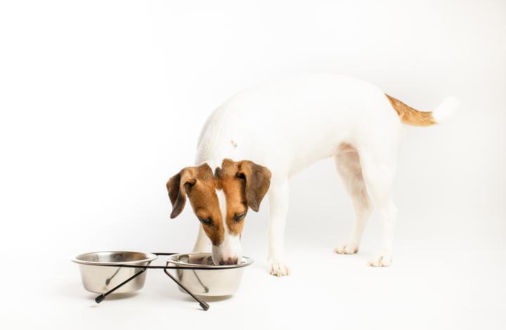 酶解过程对宠物诱食剂的风味形成至关重要